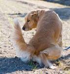 トイレのしつけの大事なポイント~愛犬と仲良く暮らす為に~