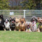 一人暮らしにおすすめ飼いやすい犬種ベスト5