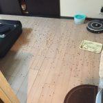 飼い猫が生ゴミをあさってしまうのは何故なのか?