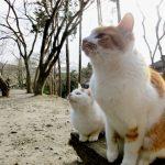 わがまま猫にも「待て」をしつける3つのポイント
