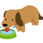 犬も水分補給が重要!1日どのくらいの水が必要なの?