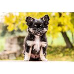 小型犬のワンちゃんに、かかりやすい病気があるって知ってた?