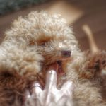 犬の困った噛み癖を直すための3つの方法