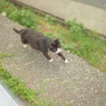 またやられた、、猫が脱走しないようにしつける3つの防止策