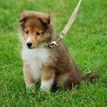 楽しく犬とお散歩!上手にしつけておきたい3つのポイント