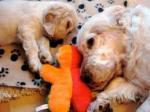 愛犬の行動にはこんな理由があった?!遺伝子検査でわかる愛犬の特徴