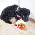 犬が食べやすいフードボウルや器はどんなもの?
