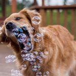 犬のトリミングの頻度と選び方