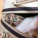 飼い猫が威嚇してくる、、原因としつけ対策を知っていますか?