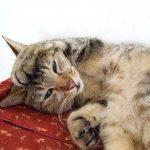 猫がグルーミング時に大人しくするためのしつけ3つのコツ