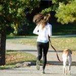 犬をしつけて一緒に散歩させたいと思った時に知るべき3つの注意点