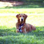 犬のしつけは難しい?知っておくべき犬の生態と習性