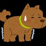 ウチの犬が便秘に、、食事で出来る便秘対策