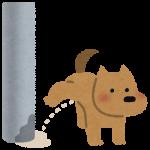 犬の泌尿器系の病気って?