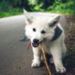 犬のおしゃれは手作り洋服まで発展中!