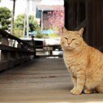 人と猫の歴史!僕らはいつから仲良しなの?