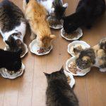 飼い猫にどんなキャットフードをあげればいいの?