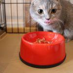 生後六か月までの子猫におすすめキャットフード5選