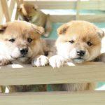 子犬をブリーダーから購入する時に気をつけるポイントってありますか?