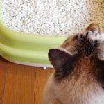 猫を飼うのにトイレはどうすればいいの?