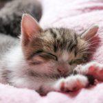 猫の食事は塩分に気を付けるべき3つの理由