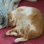 飽きさせない工夫が必要!猫が食欲不振になった時の原因と対策