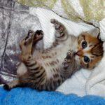 ウチの猫が便秘に、、食事で出来る便秘対策